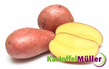 PFLANZKARTOFFEL LunaRossa 10 kg Pflanzkartoffeln ROT zertifiziert Saatkartoffel