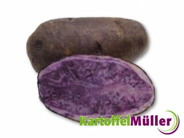 Salad Blue (Blue Salad Potato)