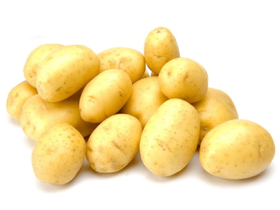 kartoffel nicola ernte