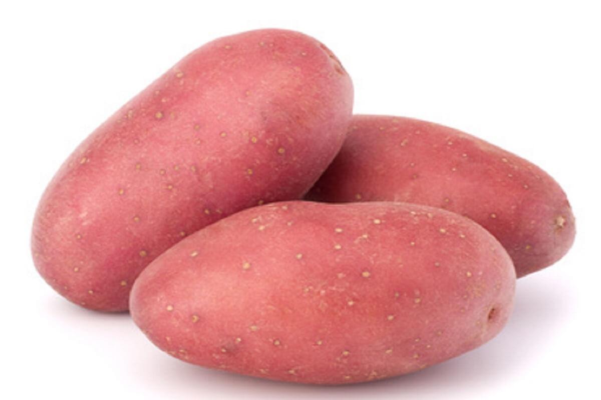 Pflanzkartoffel Rosara Kartoffel Müller