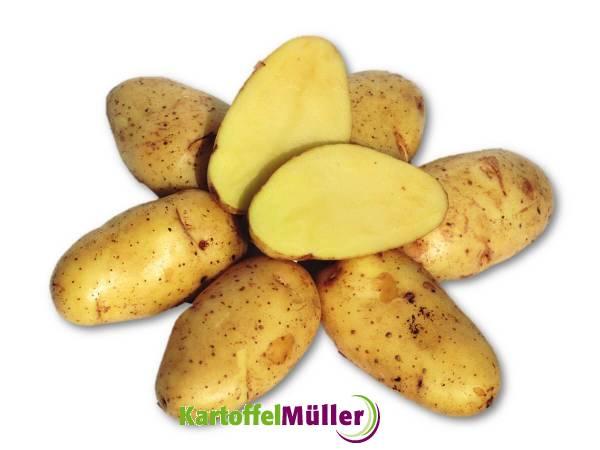 kartoffel sieglinde jeremiah